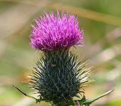 Love me and my thistle!